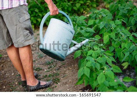 retired person watering her plants in a garden - stock photo