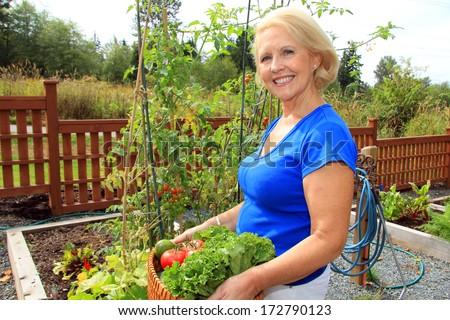 Retired woman in the vegetable garden holding a basket of freshly picked lettuce and tomatoes.  - stock photo