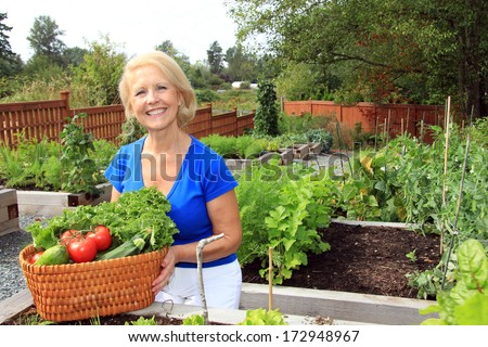 Retired woman in the vegetable garden holding a basket of freshly picked lettuce and tomatoes. Also available in vertical.  - stock photo