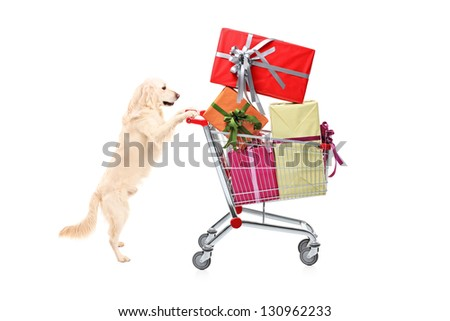 Retriever dog pushing a shopping cart full of wrapped presents isolated on white background - stock photo