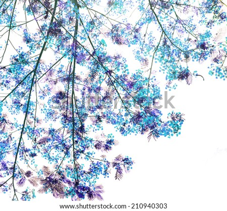 Retro blue color tone of Flam-boyant flower background - stock photo
