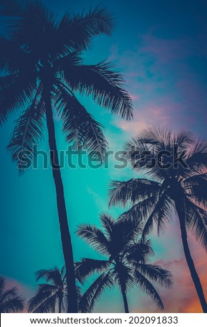 Retro Filtered Photo Of Hawaii Palm Trees At Sunset - stock photo