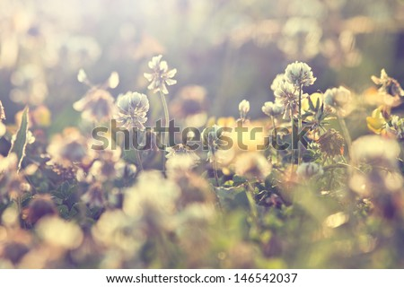 retro flowers background - stock photo