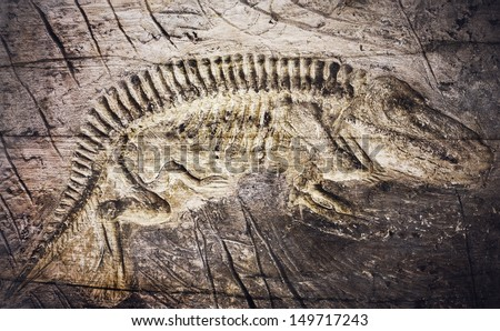 Retro image of Fossil Model , vintage - stock photo