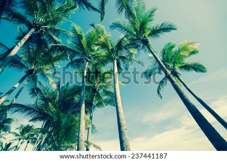 Retro image of Palm trees low angle view. - stock photo