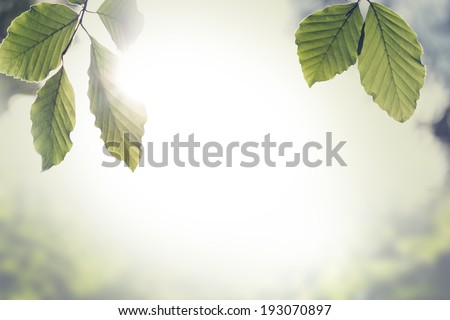 Retro instagram style image of a fresh green spring leaves with sun flare against a blurred nature background with copyspace. - stock photo