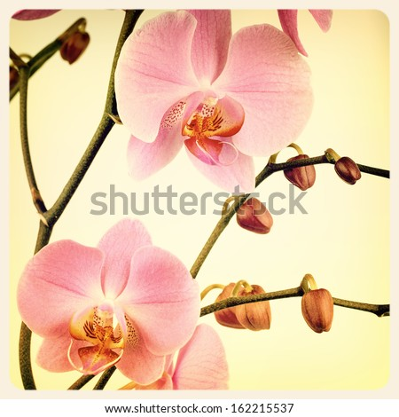 Retro style pink orchid background. Cross processed to look like an aged instant photo. - stock photo