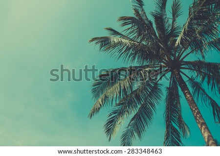 Retro stylized palm tree with sky on background with copy space - stock photo