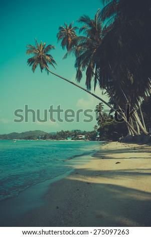 Retro toned palm tree on tropical beach - stock photo