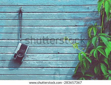 Retro vintage camera hanging on wooden natural boards with green plant. Copy space - stock photo