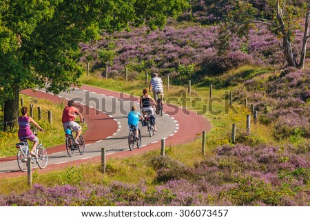 RHEDEN, THE NETHERLANDS - AUGUST 13, 2015: Cycling tourists in Dutch national park Veluwezoom with blooming purple heath in Rheden, The Netherlands - stock photo