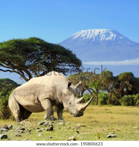 Rhino in front of Kilimanjaro mountain - Amboseli national park Kenya - stock photo