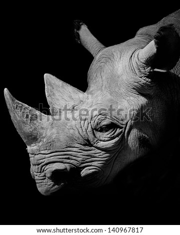 Rhino Portrait - stock photo