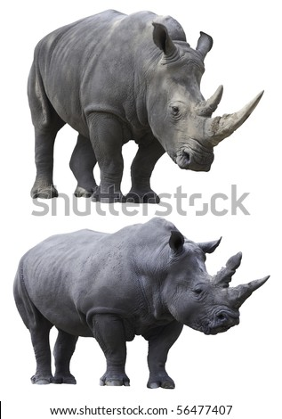 rhino rhinoceros big strong african mammal endangered species - stock photo