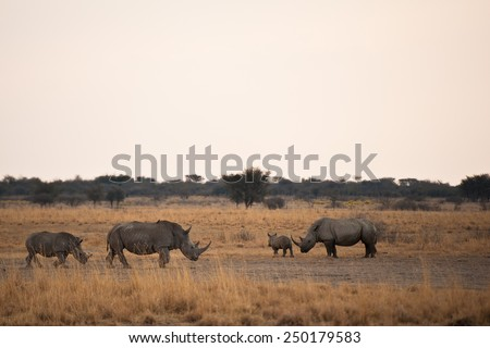 Rhinoceros, Botswana, Kalahari Desert, Africa - stock photo