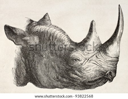 Rhinoceros head old illustration. By unidentified author, published on Le Tour du Monde, Paris, 1867 - stock photo