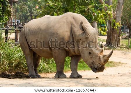Rhinoceros is in the zoo - stock photo