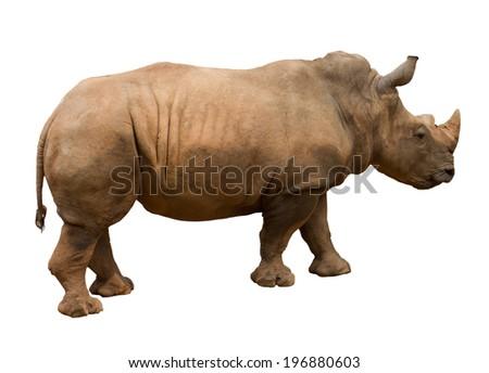 Rhinoceros isolated on white background  - stock photo