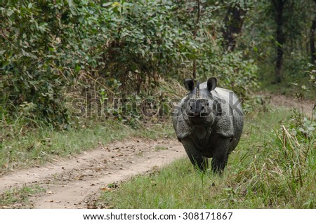 rhinoceros, plural rhinoceroses, rhinoceros, or rhinoceri,  
