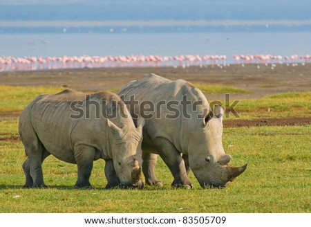 rhinos in lake nakuru national park, kenya - stock photo