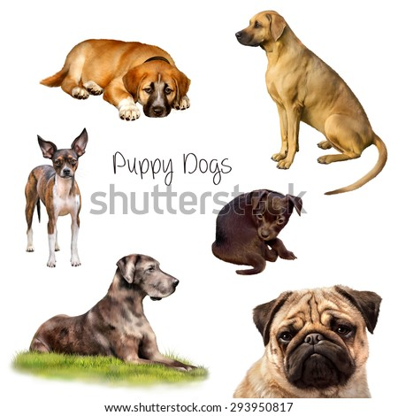Rhodesian Ridgeback dog sitting, Chihuahua puppy standing looking at us, portrait of a pug, grate dane laying in grass isolated on white - stock photo