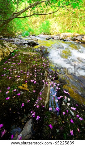 Rhododendron dauricum bagulnik fallen flowers on stream Smolny in russian primorye reserve - stock photo