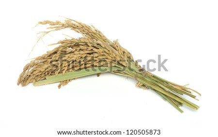 Rice branch baldo on white background - stock photo