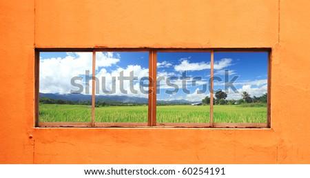 rice farm behind a window - stock photo