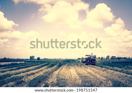 rice field after harvested by combine machine - stock photo