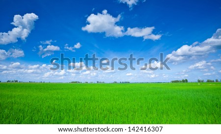 Rice field green grass blue sky cloud cloudy landscape - stock photo