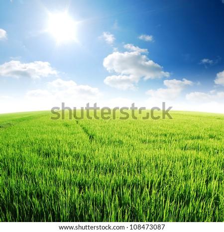 Rice field green grass blue sky cloud cloudy landscape background - stock photo