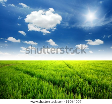 Rice field green grass blue sky cloud cloudy landscape background lawn - stock photo
