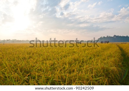 Rice field in Uttaradit, Thailand - stock photo