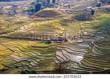 Rice field terraces in Vietnam - stock photo