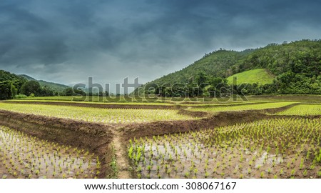 Rice field with mountain background in Chiangmai, Thailand - stock photo