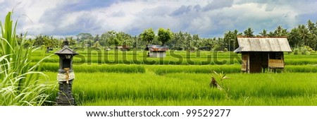 rice fields - stock photo