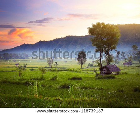 Rice fields and mountains on the horizon at sunrise. Bali. Indonesia - stock photo
