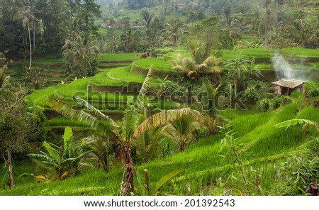 Rice fields in a valley at morning light. Bali island - stock photo