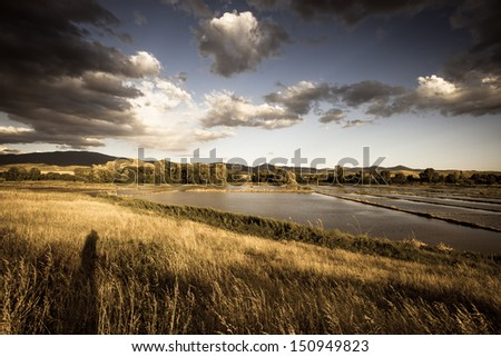Rice fields in Macedonia  - stock photo