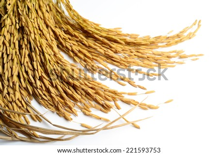 Rice grain on white background - stock photo