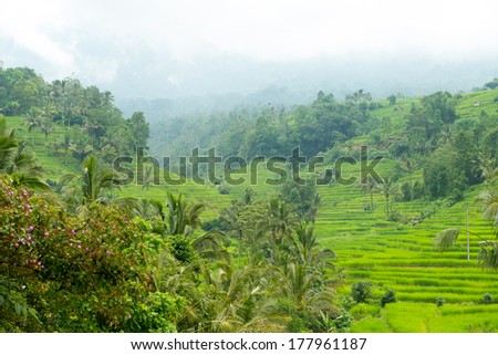 Rice paddies of Bali on the cloudy overcast day with a little rain - stock photo