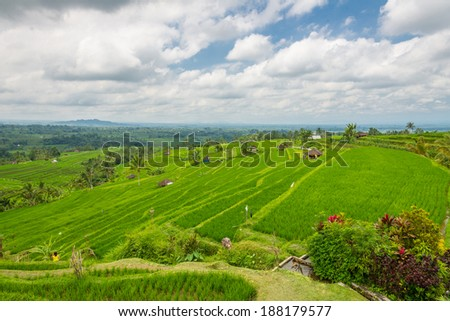 Rice paddy at Jatliluwih in Bali, Indonesia - stock photo