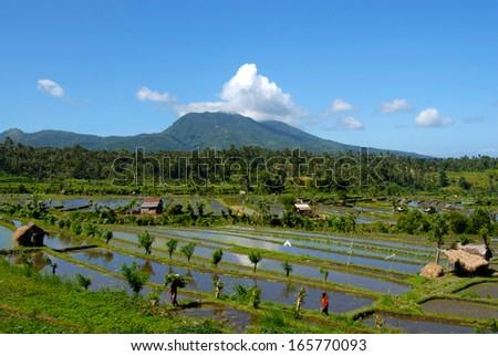 Rice plantation nearby a volcano in Java, Indonesia. - stock photo