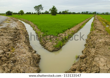 Rice terrace and mountains on a horizon - stock photo