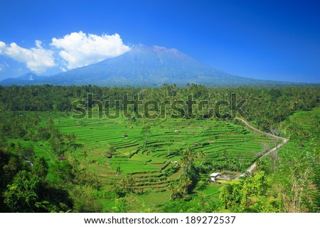 Rice terrace Bali Island Indonesia tree plant field green - stock photo
