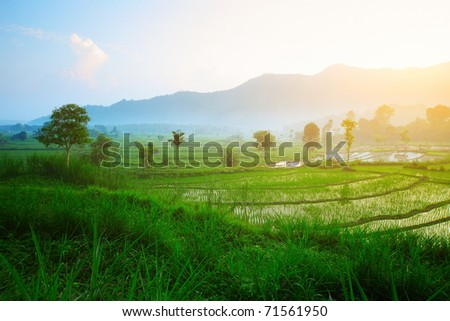 Rice terrace in mountains. Bali. Indonesia - stock photo