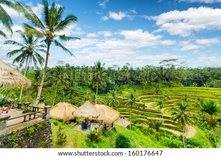 Rice terrace of Bali Island, Indonesia. - stock photo