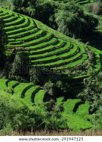 Rice Terraced  on Mountain, Chiangmai Province, Northern of Thailand - stock photo