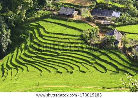 Rice terraces and house  on the mountain. - stock photo
