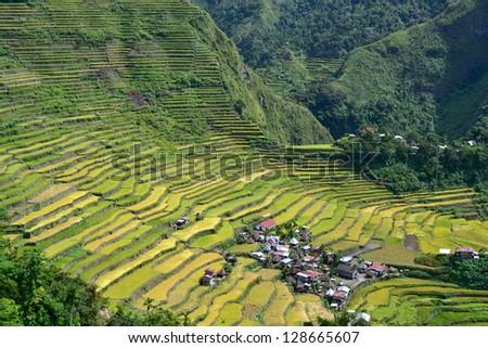 Rice terraces in Batad - stock photo